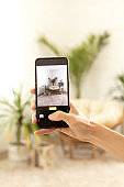 Mobile phone taking photo of green houseplants