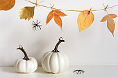Halloween composition with pumpkins, spiders and floral garland on table wall background. Home decoration