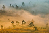 Beautiful foggy sunrise mist covered mountain forest landscape top view - Mountain ranges with tree at countryside
