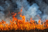 Burning dry field on the side, horizon in danger, spring warming
