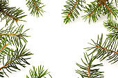 Pine branches isolated on white background, seamless pattern. Christmas and New Year background.