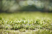 Green grass with drops of dew. Foreground and background in blur. Photo with bokeh.