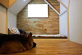 german shepherd ly down on floor with mockup picture