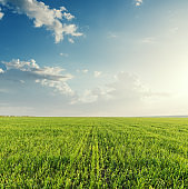green agriculture field and sunset in clouds