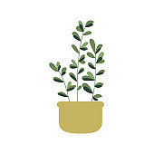 Zamioculcas, Ficus, Eternity plant in pot. House indoor plant. Botanical, tropical.