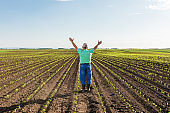 Rear view of senior farmer standing in corn field with his arms outstretched.