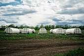 view of several greenhouses on a field at a farm