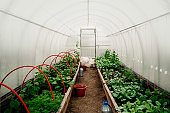 different vegetables growing inside a greenhouse on a family farm
