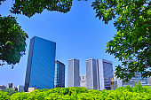 Fresh green and skyscrapers