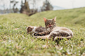 mother cat with her kitten baby outdoors in a sun