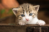 tiny small kittens in a old wood box outdoor