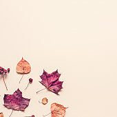 Autumn pastel background made of leaves, berries and cones.
