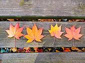 Autumn leaves background. Japan autumn.