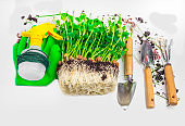 gardening tools, microgreen with soil