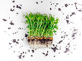 Sprouts of peas microgreen with soil