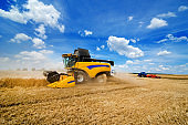 close view of modern yellow combine harvester in action on wheat field with beautiful sky