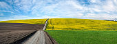 agriculture field lines of dirt road in arable land and rape flower field landscape