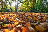Golden autumn fall October in famous Munich relax place - Englishgarten. Munchen, Bavaria, Germany