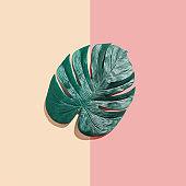 Tropical plant Monstera leaf