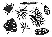 Collection of black ink hand drawn tropical leaves