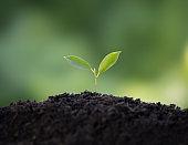 The seedlings igrowing on fertile soil.