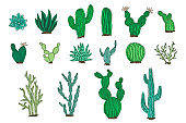 Collection of outline color vector cactus elements