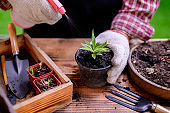 Gardener planting the tree and growth up. Home gardening nature and environment hobby. Relax and recreation on spring harvest season at home.