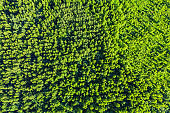 Aerial top view of summer green trees in forest