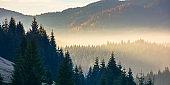 forest landscape in fog