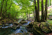 water stream in the beech forest