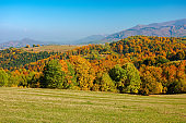 trees in colorful foliage on the hills