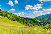 fields and meadows of rural landscape in summer