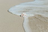 Sea touching the sandy shore and a shell