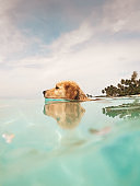 Dog swims in the crystal clear ocean in tropical climate