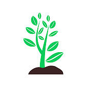 plant sprouting from ground. Symbol of ecology, environmental awareness