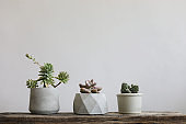 Cactus plants in white minimal decoration on wooden table with white wall background