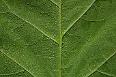 Green leaf with rain waterdrops