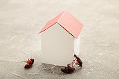 Dead cockroaches and paper house on grey. Insect companies concept prevents house-threatening insects. Pest control
