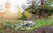 Garbage in forest. People illegally thrown garbage into forest.