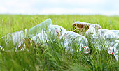 Pollution problem. Closeup used  plastic wast lying on green grass.