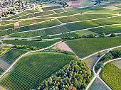 Vineyard in summer time from aerial drone photography