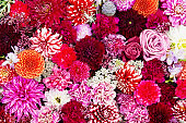 Autumnal colorful flower background. Flowerbed, carpet of colorful flowers. View from above