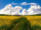 beautiful path in countryside with meadows and clouds