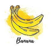 illustration of Banana fruit. Vector watercolor splash background. Graphics for cocktails, fresh juice design. Natural organic food label.