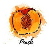 illustration of half peach fruit. Vector watercolor splash background. Graphics for cocktails, fresh juice design. Natural organic food label.
