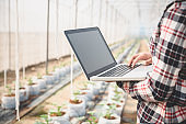 Agriculture technology farmer man using tablet computer analysis data. The agronomist examining the growth of plants on the greenhouse farm.