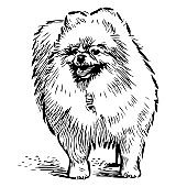 Sketch of fluffy cute lap dog standing on the street