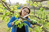 Woman gardener in gloves with garden saw cuts branches