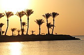 Tropical island with palm trees in ocean in dawn. Summer vacations