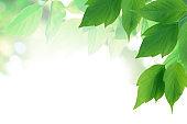 Green Leaf Border